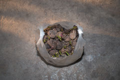 Patate nel sacchetto di plastica Fotografie Stock