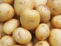 Patate novelle immagine stock