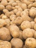 patate Patate fresche Patate nel mercato Patate gialle Fondo delle patate Immagine Stock