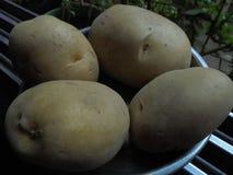 Patato indian stock image