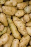 patatoes ratte年轻人 库存照片