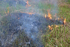Patch Of Burning Grass Royalty Free Stock Photo