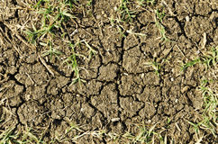 Patch of dry earth Stock Images