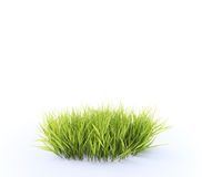 Patch of grass. Small, round patch of fresh grass Stock Images