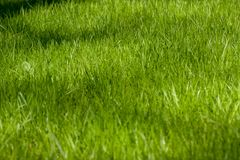 Patch of green grass in springtime. Patch of young green grass in springtime lit by sunshine Stock Photo