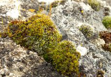 Patch of moss Stock Photography