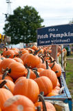 Patch Pumpkin Stock Image