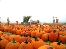 patch pumpkin rows στοκ εικόνες