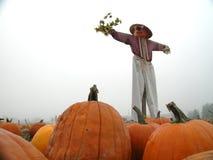 patch pumpkin scarecrow Στοκ Εικόνες