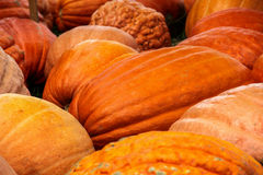 Gourd Pumpkins Autumn Harvest Stock Images
