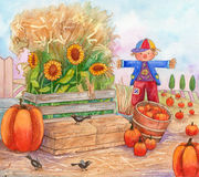 Patch Time. Watercolor Illustration of a pumpkin patch, with scarecrow, birds, pumpkins and sunflowers Royalty Free Stock Image
