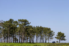 Patch of trees with lonely car. Beautiful view with a small patch of trees with lonely car royalty free stock image