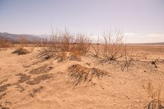 Patches of dying grass line the edge of the desert in Death Valley. Arizona royalty free stock photos