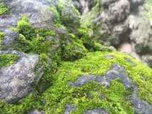 Patches of Moss covered rock by the teahouse Royalty Free Stock Photo