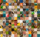 Patchwork of 196 skins. Patchwork of 196 animals and human skin royalty free stock photography