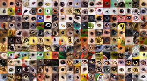 Patchwork of animals eyes Royalty Free Stock Photos
