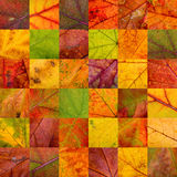 Patchwork of Autumn Leaves Royalty Free Stock Photography