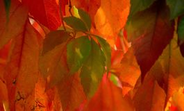 Patchwork composed of autumn leaves royalty free stock photos