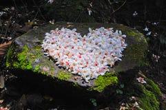 Patchwork de fleur d'arbre de Fordii (Tung) (forme de coeur) Photo libre de droits