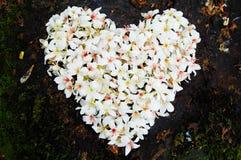 Patchwork en gros plan de fleur d'arbre de Fordii (Tung) (forme de coeur) Photographie stock libre de droits