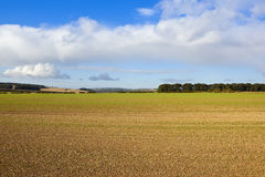 Patchwork fields in autumn Royalty Free Stock Photo