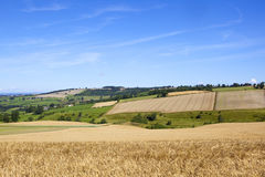 Patchwork fields and barley. Yorkshire wolds patchwork fields agricultural landscape with a golden barley field under a blue summer sky Royalty Free Stock Photos