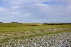 Patchwork fields with hedgerows and wheat in winter Stock Image