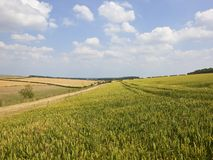 Patchwork fields of ripening cereal crops in summertime Stock Image