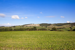 Patchwork fields Stock Image