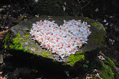 Patchwork of Fordii (Tung) tree flower (Heart shape) Royalty Free Stock Photo