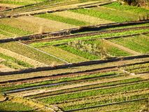 Patchwork of small green fields stock images