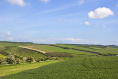 Patchwork summer landscape Stock Image