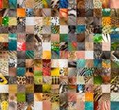 Patchwork von 196 Häuten Lizenzfreie Stockfotografie