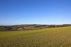 Patchwork winter landscape of the Yorkshire wolds. Patchwork winter landscape with young wheat crop hills and hedgerows under a clear blue sky in the yorkshire Royalty Free Stock Photos