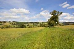 Patchworkfelder der Yorkshire-Wolds in der Sommerzeit Lizenzfreies Stockbild