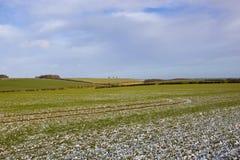 Patchworkfelder mit Hecken und Weizen im Winter Stockbild