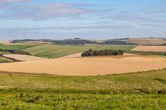 Patchworkjordbruksmark i Sussex royaltyfri bild