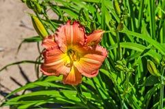 Patchworku dnia leluja w pomarańcze zdjęcie stock