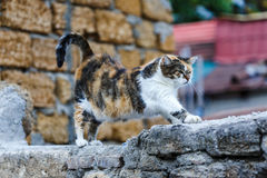 Patchy cat stretches himself on the stone wall. Patchy fat cat stretches himself on the stone wall Royalty Free Stock Photo