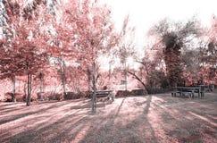 Pateira de Fermentelos公园  图库摄影