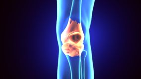 3D illustration of Patella - Part of Human Skeleton. The patella, also known as the kneecap, is a thick, circular-triangular bone which articulates with the Stock Image