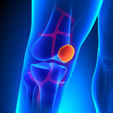 Patella Anatomy Knee Bone with Ciculatory System. With highlighted zone - pain concept Royalty Free Stock Images