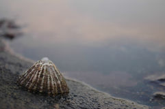 Patella su roccia Fotografia Stock