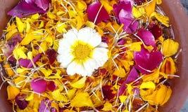 Patels de la flor Fotografía de archivo libre de regalías