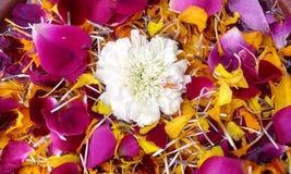 Patels de la flor Foto de archivo