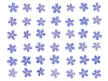 Patern of blue forget-me. Patern of tiny blue forget-bright colors on a white background Royalty Free Stock Photography