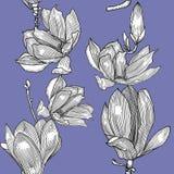 Patern met magnolies Hand getrokken Grafiek stock illustratie