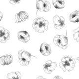 Patern senza cuciture con i papaveri nello stile grafico Fotografia Stock