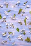 Patern tekstura wiosna Kwitnie na tle stary vin Obrazy Stock