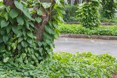 Patetismo de oro verde cerca del árbol Imagen de archivo